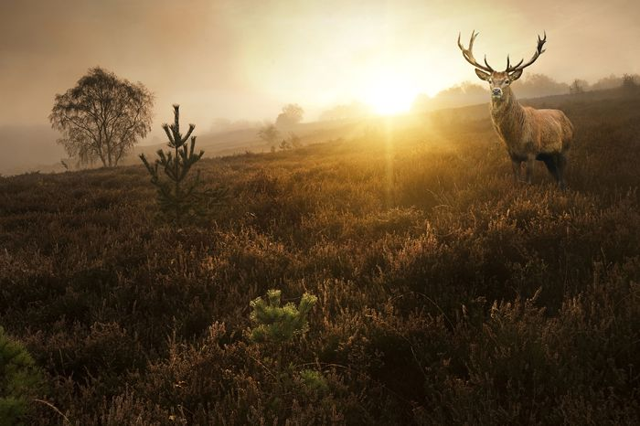 What Does the Spirit of the Stag Say to You? | Colleen M  Story
