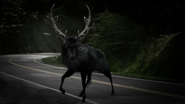 Stag Hannibal 2